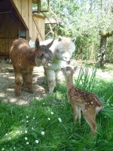 Kasparo, Valentino und Emily (Bambi) 046-2