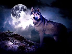 wolf-1-.jpg für Heike Indianischen Abend